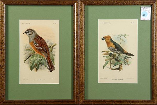 Assorted prints of birds - 3