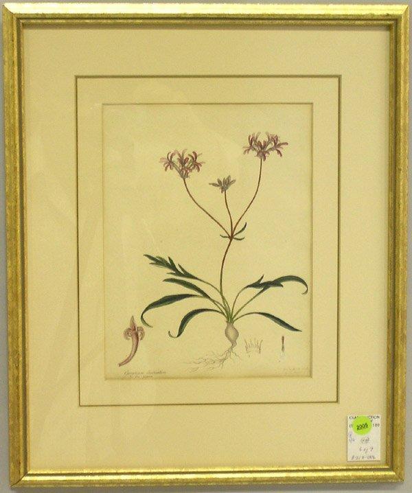 2005: Engravings, 19th c. botanicals