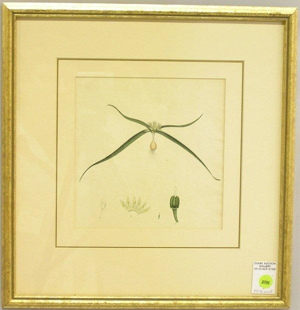 2006: Engraving, 19th c. botanical