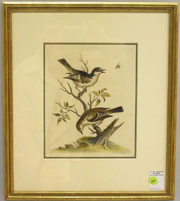 2007: Engraving, George Edwards, British