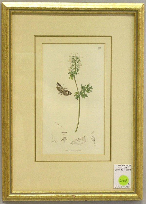 2008: Engravings, 19th c. botanicals