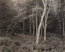 Photograph, George Tice