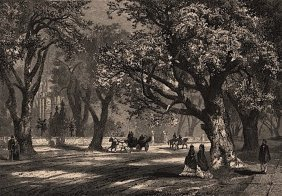 California: Oaks Of Oakland 1874