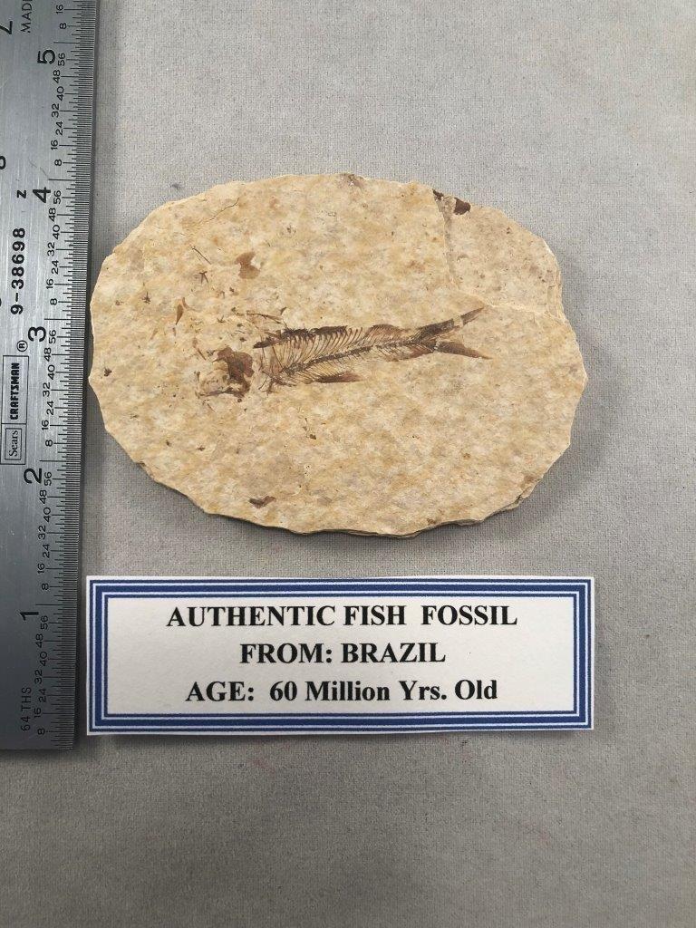 FISH FOSSIL    INDIAN ARTIFACT ARROWHEAD