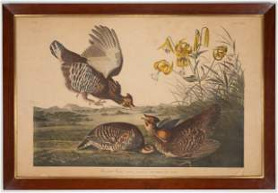 Hand Colored Print of Pinnated Grouse, after Audubon