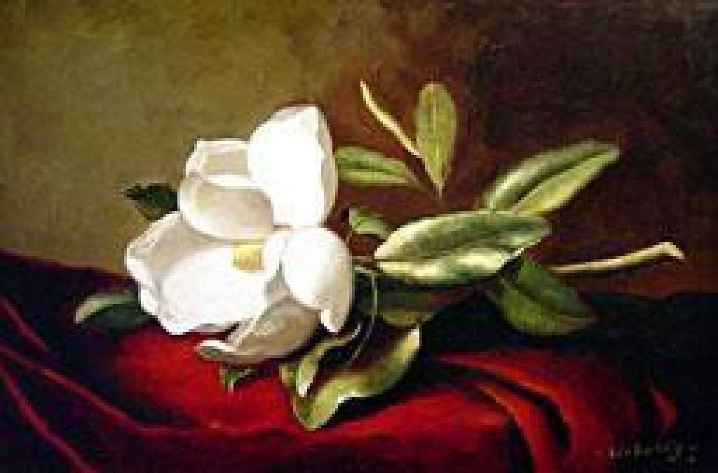 """(ART) """"A Magnolia On Red Velvet"""" - Martin Johnson Heade"""