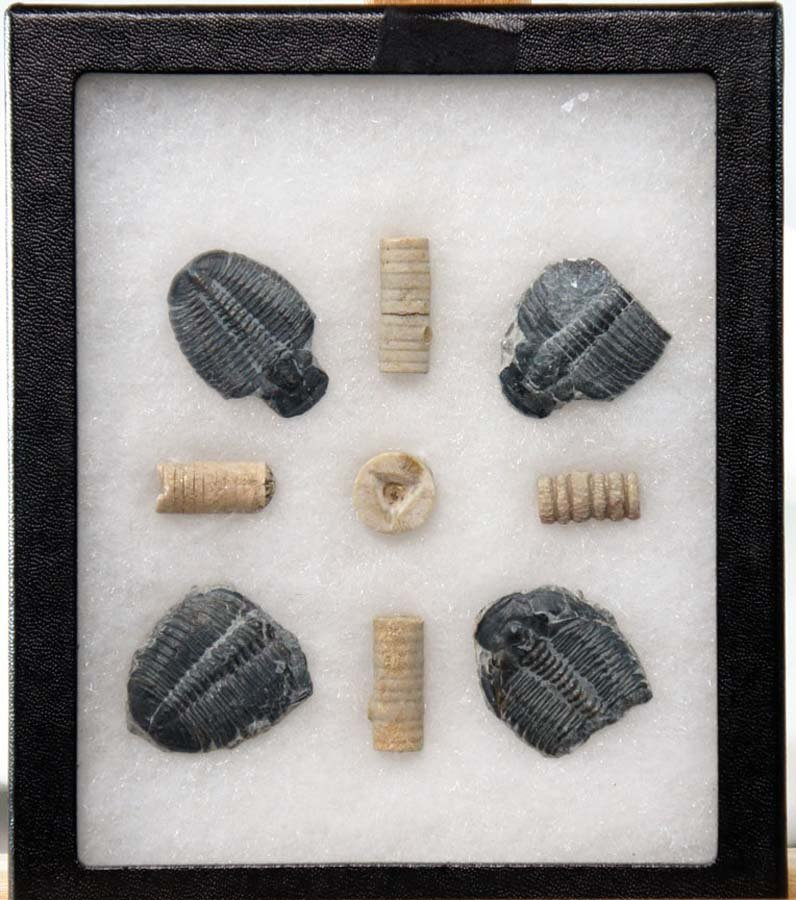 111:  PREHISTORIC TRIBALITES AND OTHER FOSSILS, ,  ,