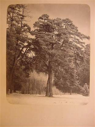 Rare Russian Photo, Scherer and Nabholz