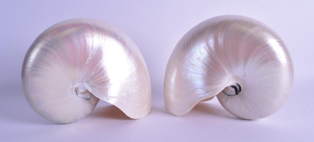 NAUTILUS SHELL of naturalistic form. 20 cm x