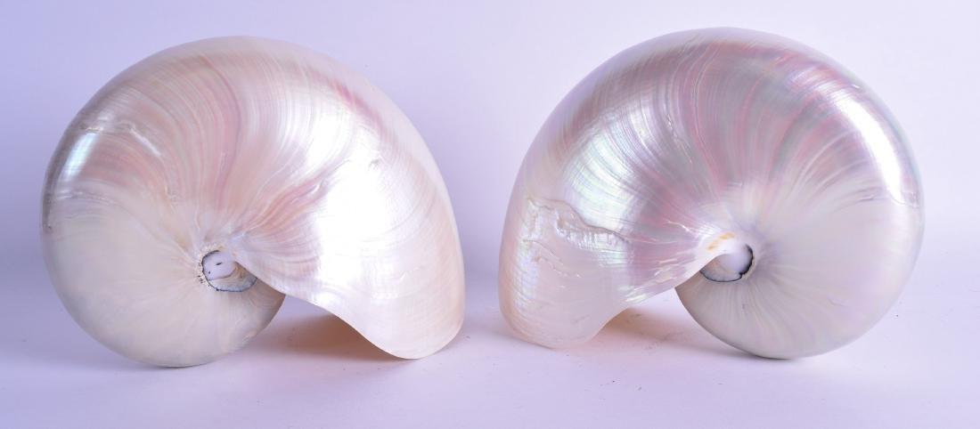 A PAIR OF NAUTILUS SHELLS of naturalistic form. 20 cm x