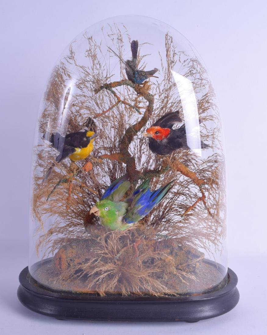 A LATE VICTORIAN/EDWARDIAN GLASS CASED TAXIDERMY