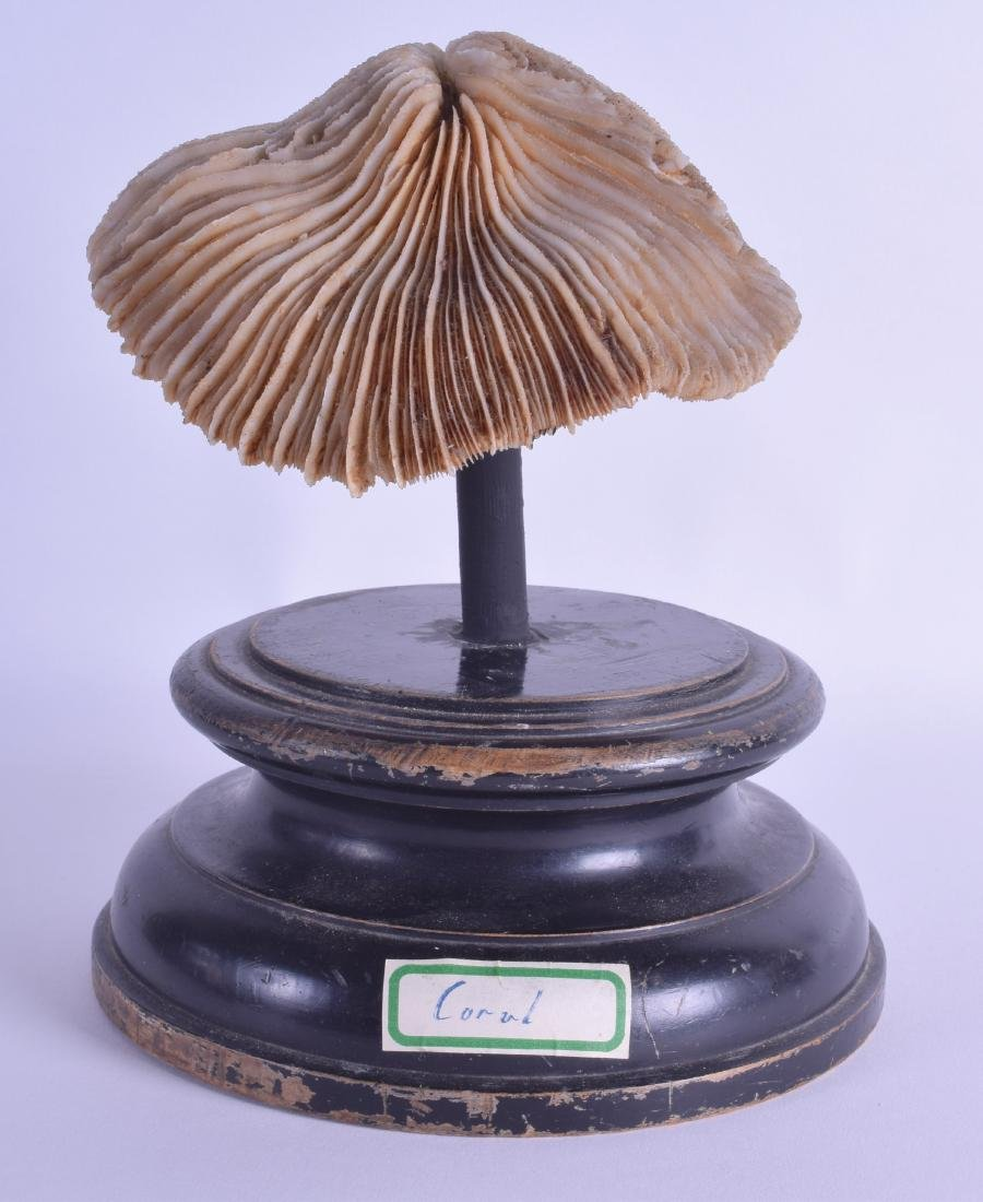 AN ANTIQUE CORAL SPECIMAN upon an ebonised base. Coral