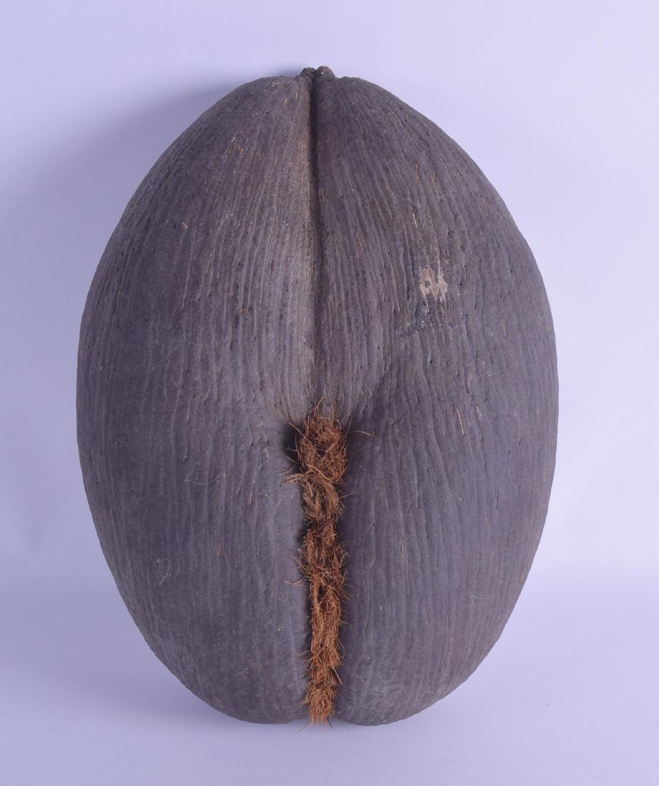 A GOOD LARGE COCOA DE MER NUT of naturalistic form. 22