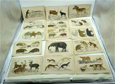 A collection of Colour lithographic plates of animals