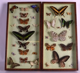 A Pair Of Victorian Cased Butterflies Contained Within