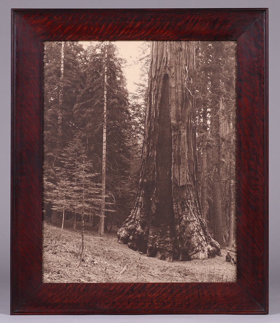 Antique Photo Yosemite's Grizzly Giant Sequoia Redwood - 2