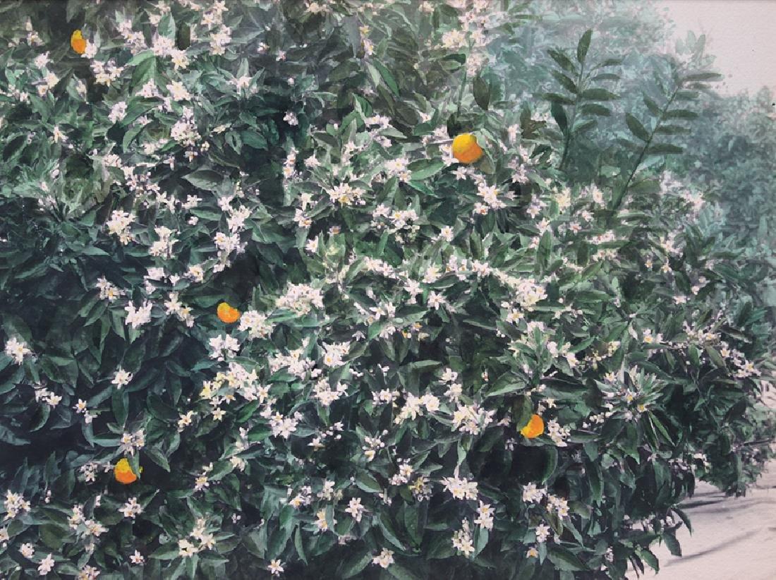 "Harold Parker Hand-Tinted Photo ""Orange Blossoms"" c1910"