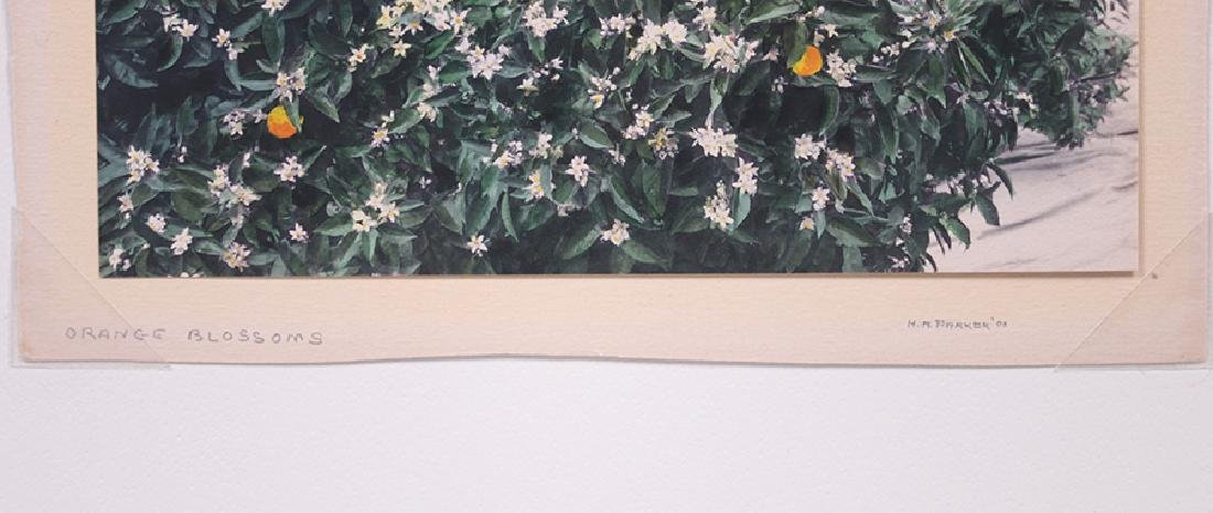 "Harold Parker Hand-Tinted Photo ""Orange Blossoms"" c1910 - 3"