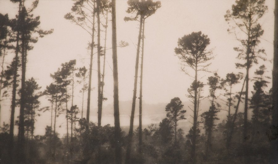 Arts & Crafts Tonalist Photograph of Monterey Cypress