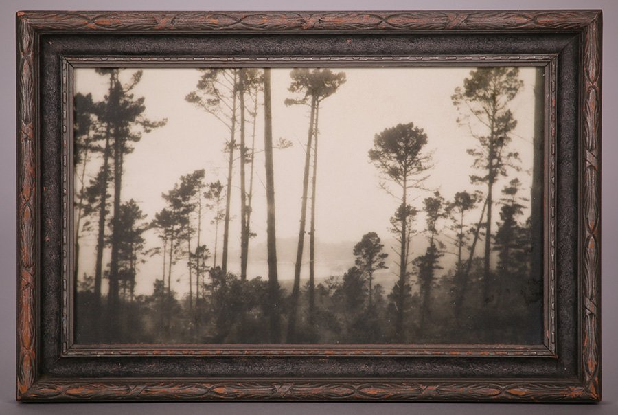 Arts & Crafts Tonalist Photograph of Monterey Cypress - 2