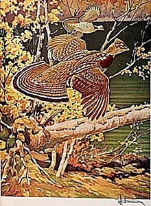 """LITHOGRAPH """"THE RUFFED GROUSE"""" BY ARTIST FRANCIS LEE"""