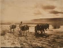 Edward Curtis, Untitled (Hopi Man and Donkeys), ca.