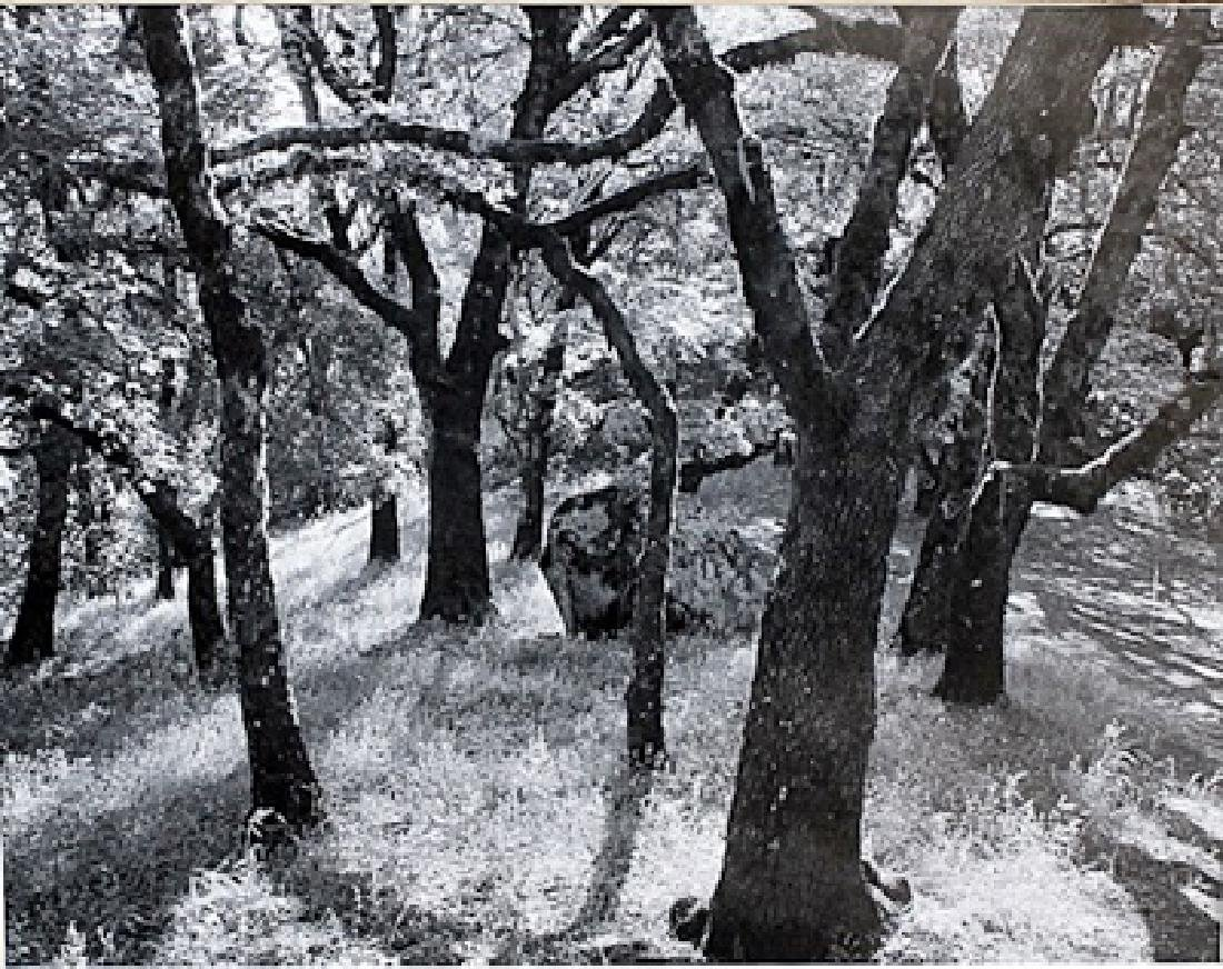 Forest, Castle Rock - Ansel Adams - Lithograph
