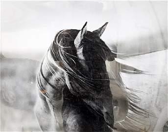 Fierce Grace - Tony Stromberg - Lithograph
