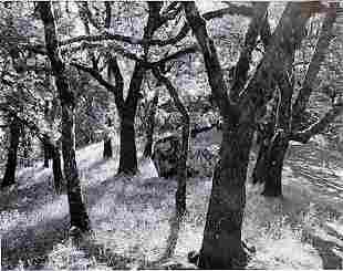 Forest Castle Rock Ansel Adams Lithograph