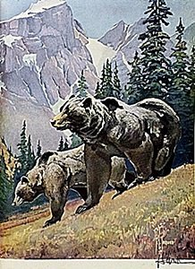 """Lithograph """"the Grizzly Bear"""" By Artist Francis Lee"""