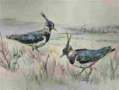 Vintage Signed Henry Wilkinson Lapwing Etching