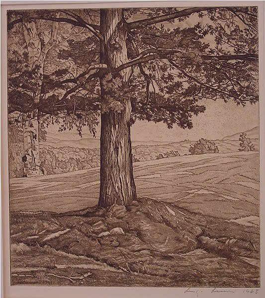 159: Lucioni Etching American Pine Tree