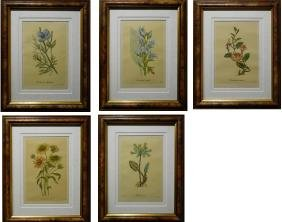 Set of Five Botanical Hand Colored Engravings