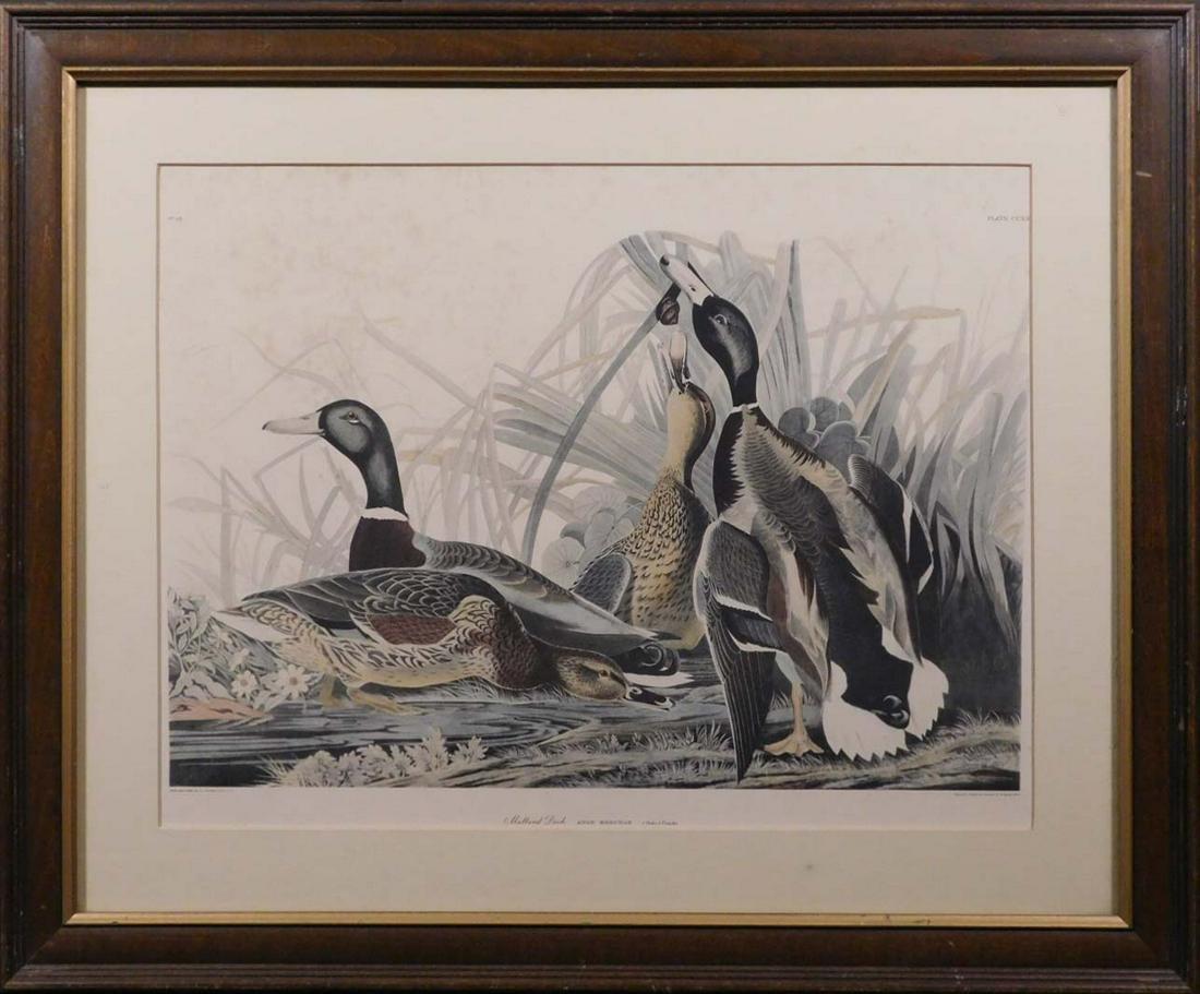 After J.J. Audubon: Mallard Duck, Anas Boschas