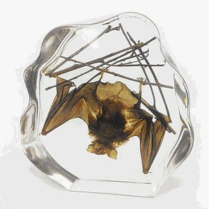 LARGE BROWN BAT SPECIMEN IN CLEAR LUCITE