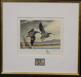 1972 Federal Duck Stamp Print Emperor Geese By Cook
