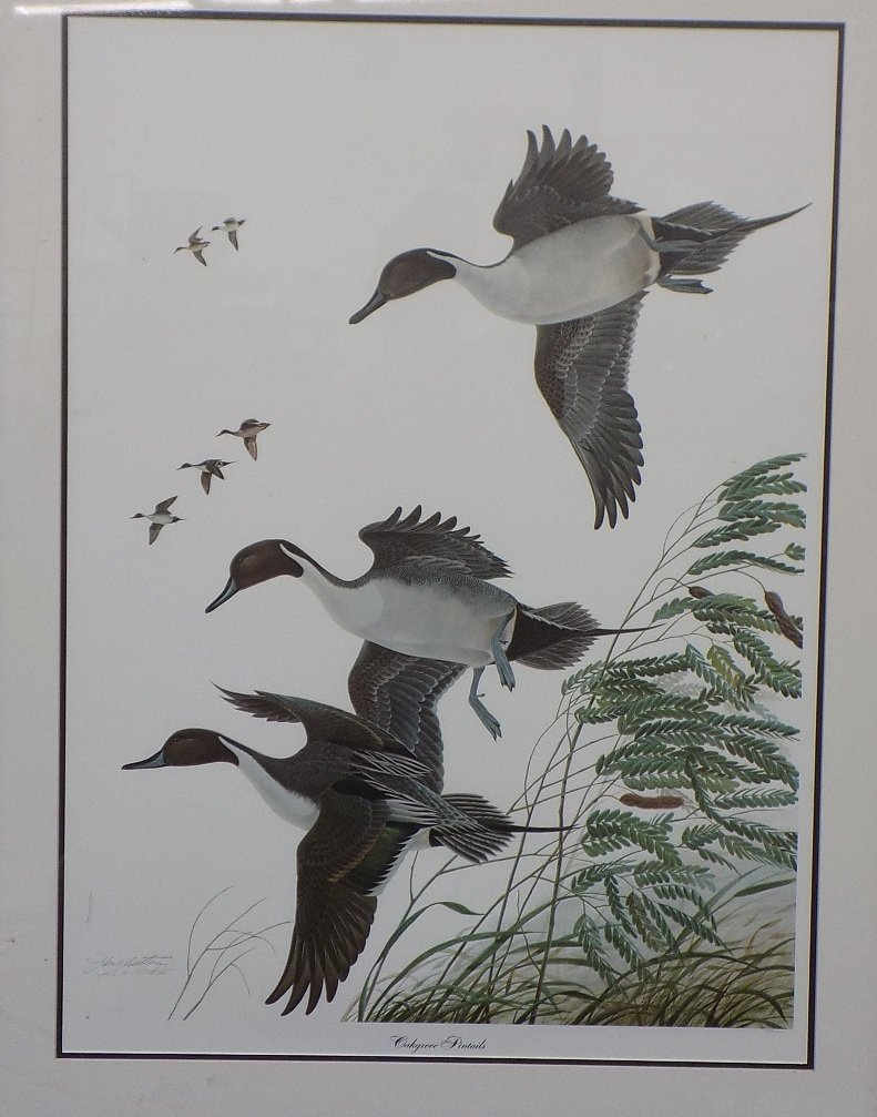 Oakgrove Pintails by John Ruthven Duck Print signed and