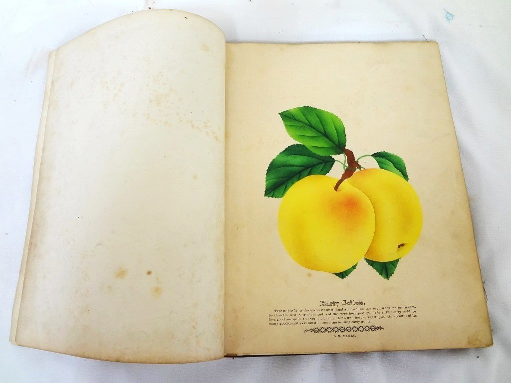 Dewey's The Colored Fruit Book: For Use of Nurserymen - 4