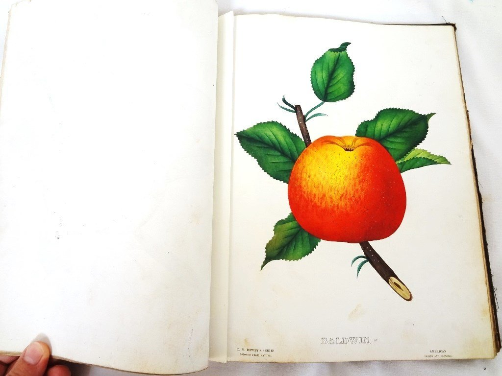 Dewey's The Colored Fruit Book: For Use of Nurserymen - 5