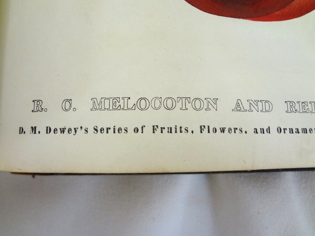 Dewey's The Colored Fruit Book: For Use of Nurserymen - 7