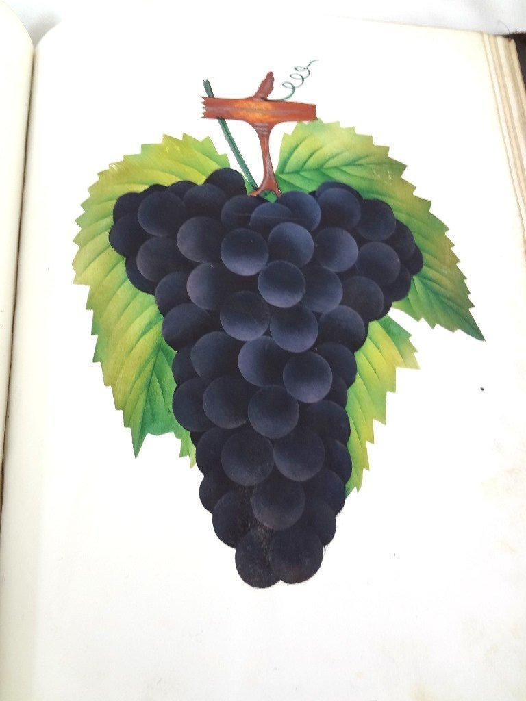 Dewey's The Colored Fruit Book: For Use of Nurserymen - 8