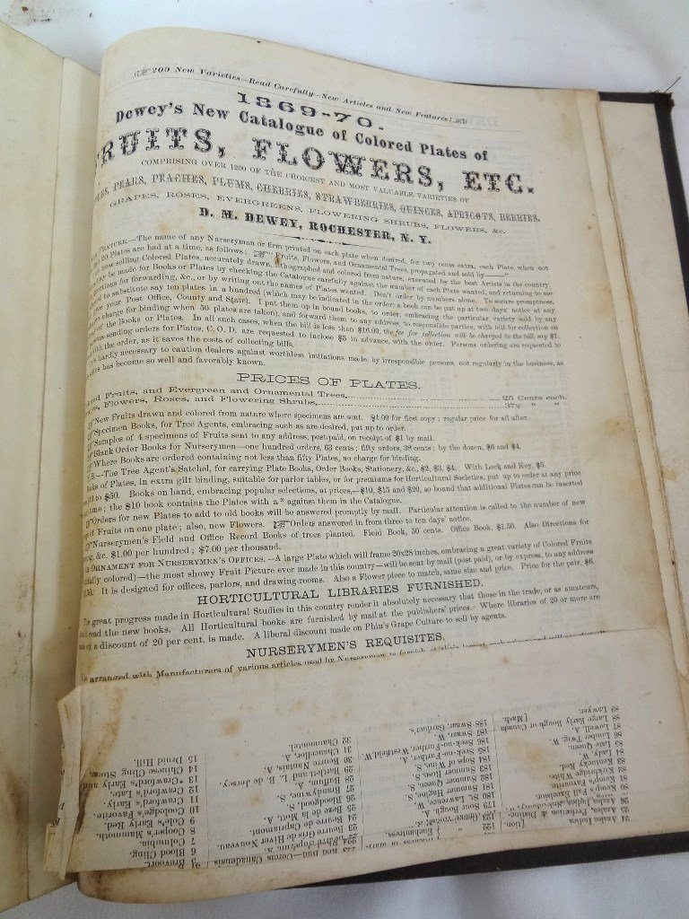Dewey's The Colored Fruit Book: For Use of Nurserymen - 9