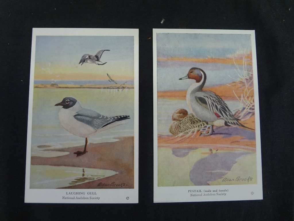(5) Sets of Audubon and Flower Cards Illustrated by - 2