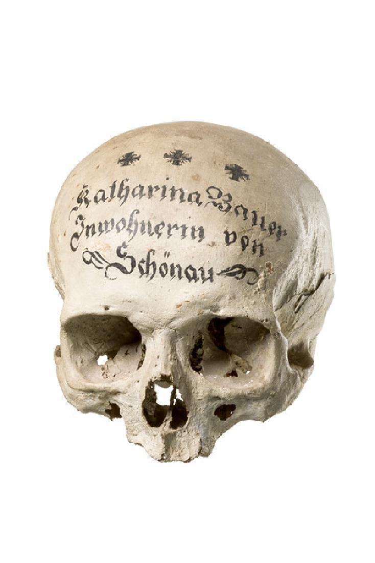 Human skull - Varia, Alpine
