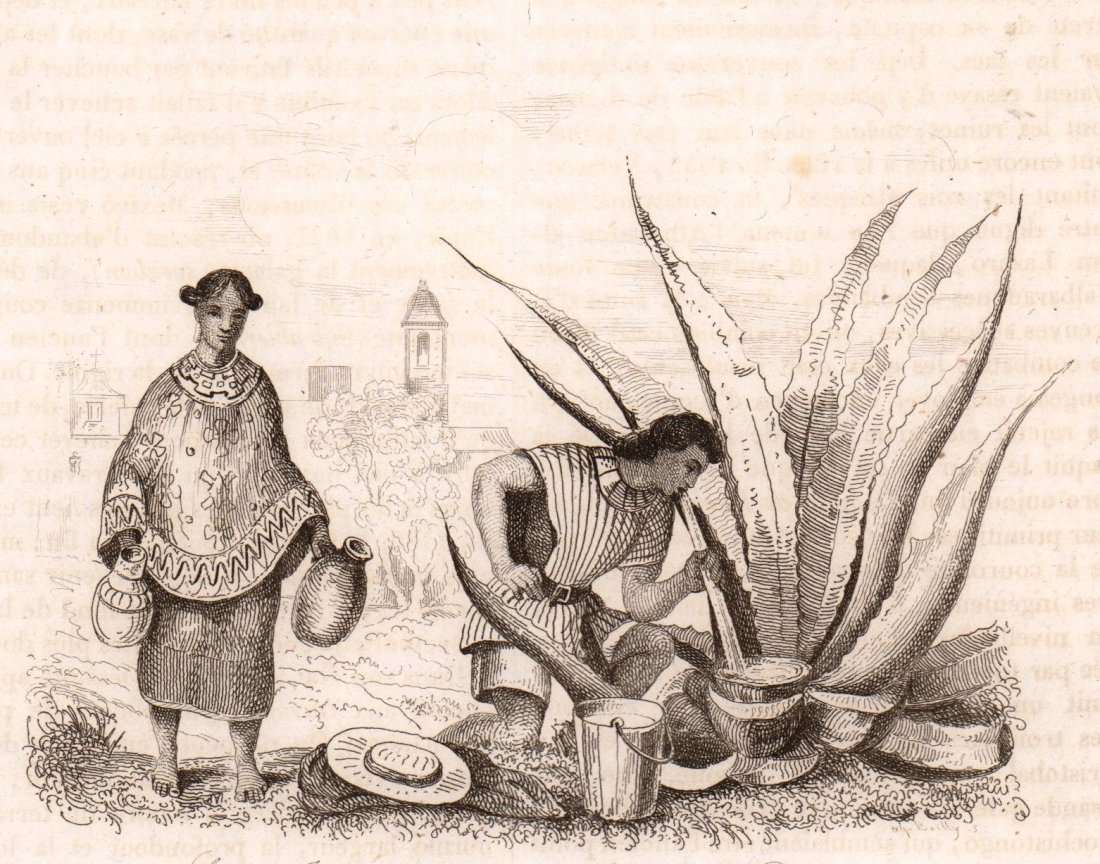 Indian maid. Extracting Pulque. Mexico. 1836.