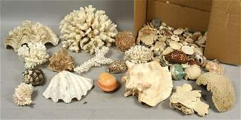 LARGE COLLECTION OF SHELLS AND CORAL