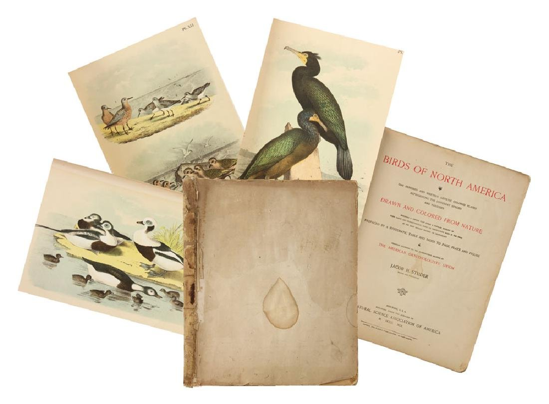 The Birds of North America by Jacob Studer