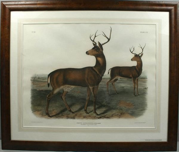 3016: J.W. AUDUBON, BLACK TAIL DEER, HC LITHO, C. 1846