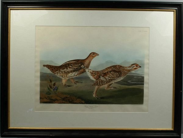 3020: J.J. AUDUBON, SHARP-TAILED GROUSE, ENGRAVING