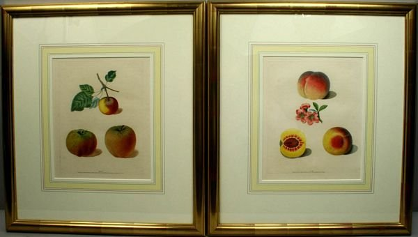 3028: BROOKSHAW, APPLES & PEACHES, (2) ENGRAVINGS